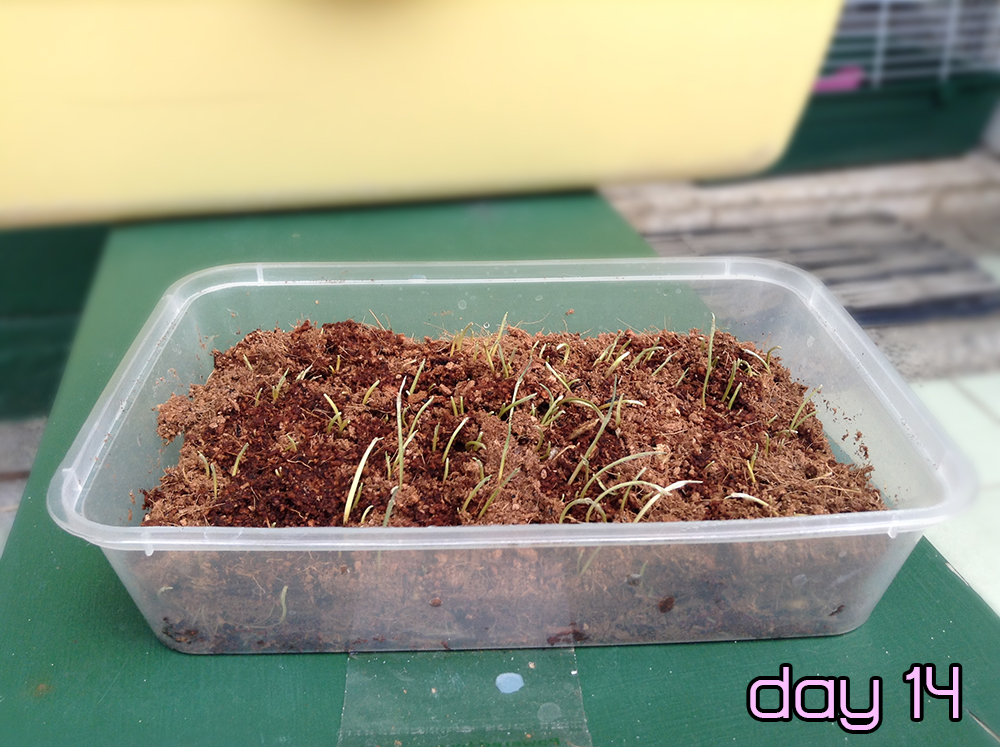 petgrass1